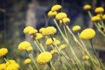 wallpaper - flowers